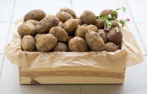bulvė