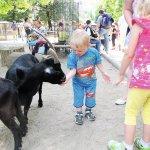 Berlyno_zoo_pamaitinti_ozkas