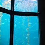 Monterey akvariumas