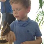 Su drugeliu, kurį auginame namuose
