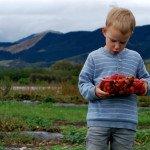 DSC_0505_Nelson_farmer_strawberry