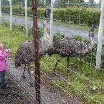 Klaipėdos zoologijos sode Marcelė gyvūnus galėjo pamatyti iš labai arti
