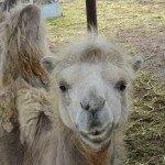 Klaipėdos zoologijos sodo gyvūnai šypsosi ir yra labai draugški