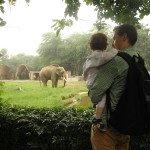 Delio zoologijos sode