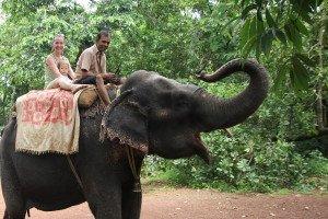 Jodinėjimas drambliais Goa valstijoje