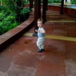 Pirmasis rytas Delyje, viešbutyjePirmasis rytas Delyje, viešbutyje