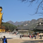 Buda gan aukštas, kokio 15-20 m ūgio