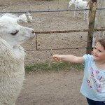 Klaipėdos mini zoologijos sodas