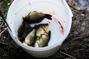Žuvis vaikams – tik nuo tėvelio meškerės