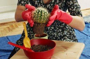 d-ir-kaktusas114