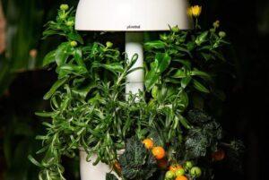 Išmanusis vazonas–daigyklė – daugiau nei stilinga jūsų namų detalė
