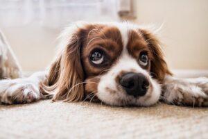 Jūsų šuo nori į šunų darželį