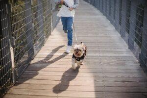 Vaikas ir buities darbai – nuo kokio amžiaus vedžios šunį ar išneš šiukšles