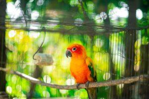 Vaikas paprašė paukščiuko? Dilema, ką pasirinkti iš papūgėlės, kanarėlės ir kikilio