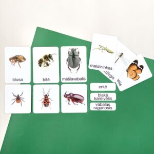 Montessori kortelės